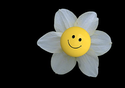 white petaled flower with emoji closeup photo