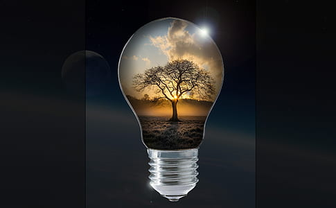 light bulb with tree artwork