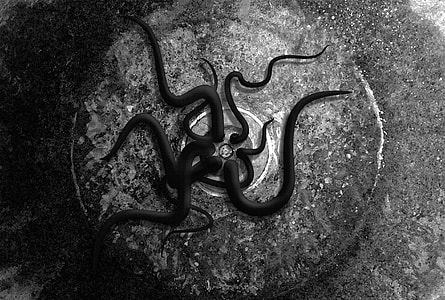 tentacles crawling out of drainage