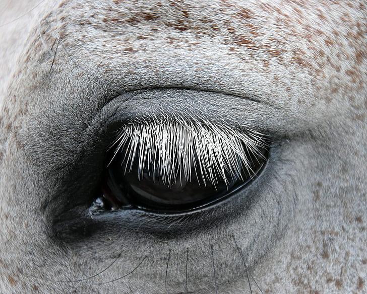 grayscale photo of animal's eye