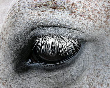 grayscale photo of animal's eye
