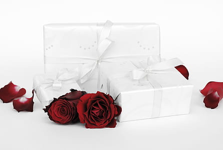 three white wrapped gift boxes and roses