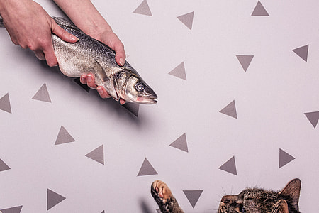 person holding grey fish