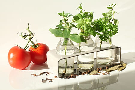 three green potted plants and tomato fruits