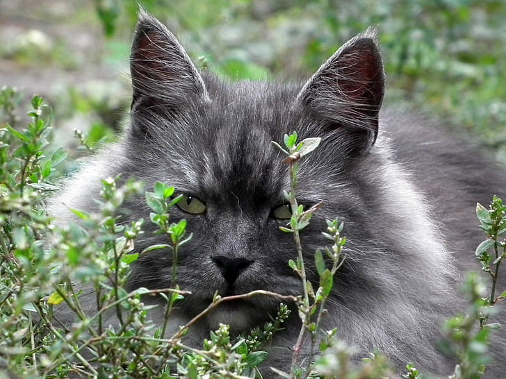 gray and white cat hiding behind bushes