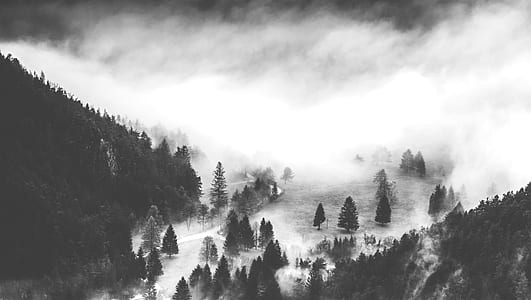 grayscale photo of misty valley