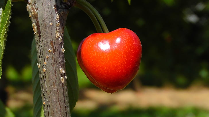 close-up photography of red fruit