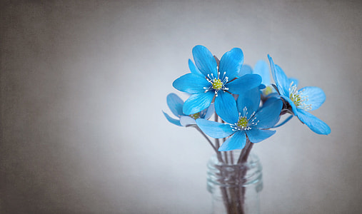 blue 6-petaled flowers in glass bottle