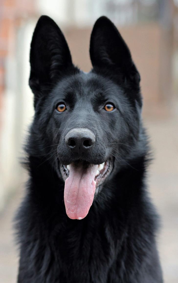 shallow focus photography of long-coated black dog