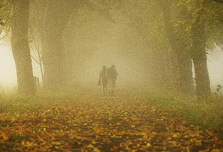 Person and Horse in Forest