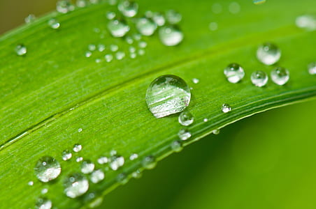 selective focus photograph of water dew