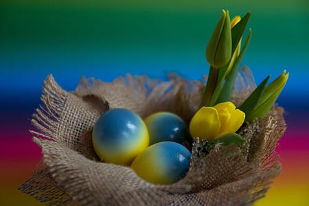 blue-and-yellow eggs