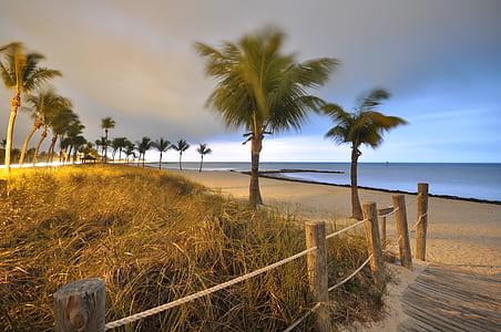 palm trees at seashore during daytime