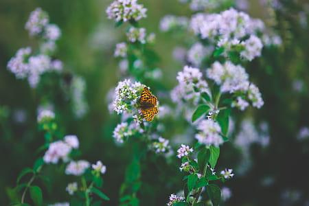 Butterfly on flower II