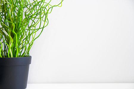 green leaf potted plant