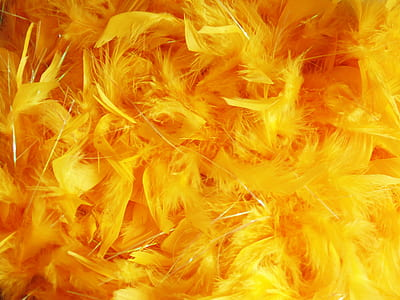 orange and yellow feather lot