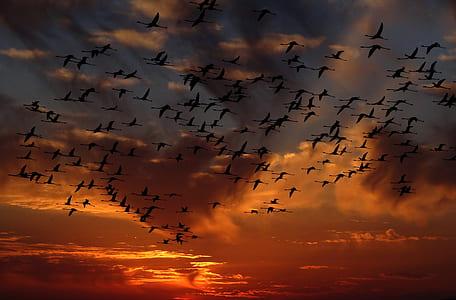 flock of birds flying during sunset