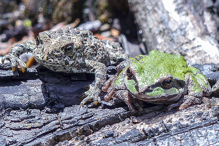 Green and Brown Frog on Wood