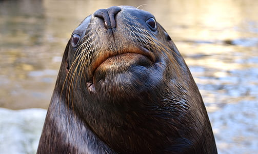 selective focus photography of seal