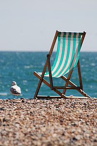 seagull standing on shore near chair
