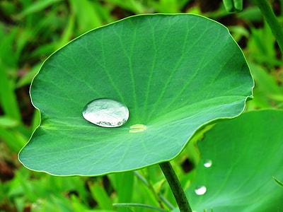 water drop on green leaf plants