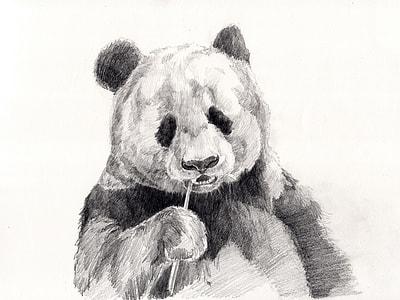 sketch of panda