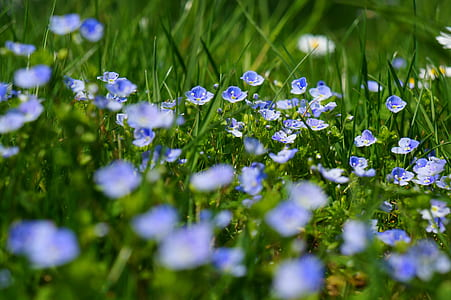 blue and white petaled flower