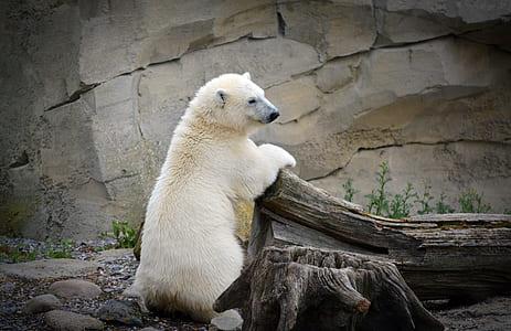 white Polar bear leaning on brown wood log at daytime