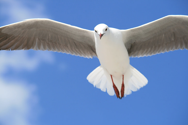 white pigeon flying under blue sky during daytime