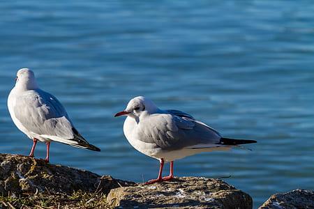 two white birds beside ocean
