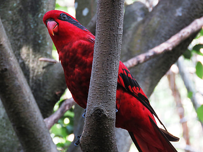 red and black bird on wooden trunk