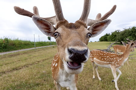 close view of deer's face