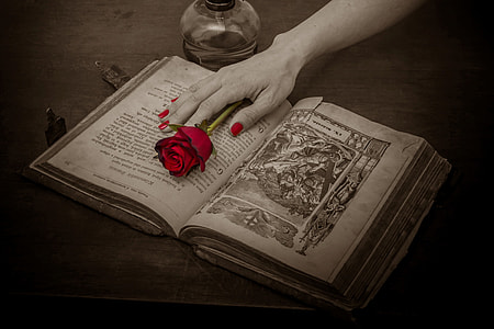 person's hand on book with re rose