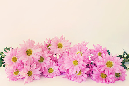 pink petaled flowers with gray background
