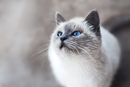 shallow focus photography of white and gray cat