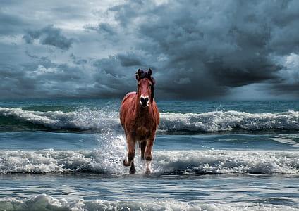 brown horse running towards on ocean at daytime