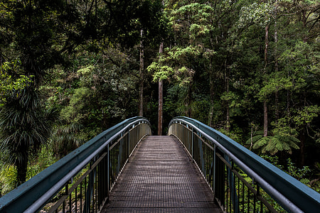 empty footbridge leading to a thick forest