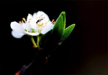 Macro Shot Photography of White Flower