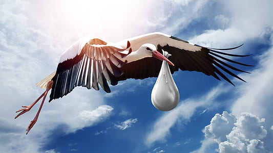 white and black bird holding white textile illustration