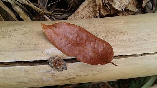 Brown Leaf on Brown Bamboo