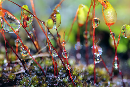 close up photography of water drops on plants