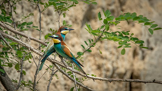 two multicolored birds on tree branch