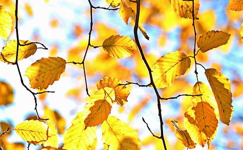 brown tree leaves