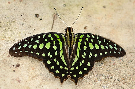 green and black spotted butterfly on beige sand