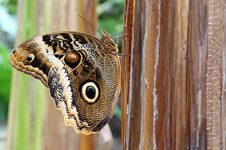 closeup photo of black, white, and brown butterflyy