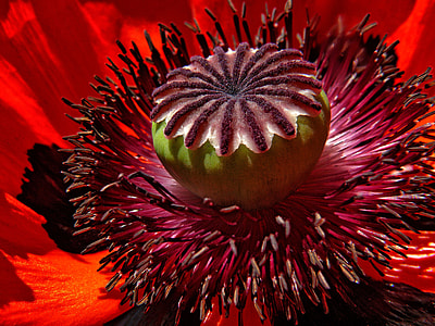 view of red flower pollen