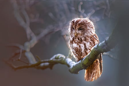 brown owl on tree bark
