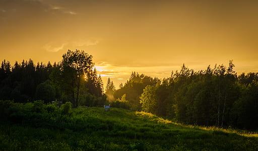 green forest field