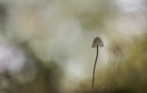 Mushroom Painting