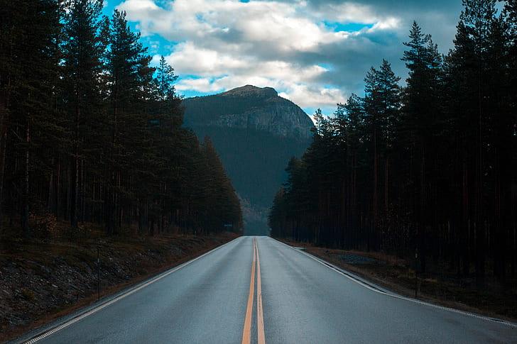 road between trees landscape photograph